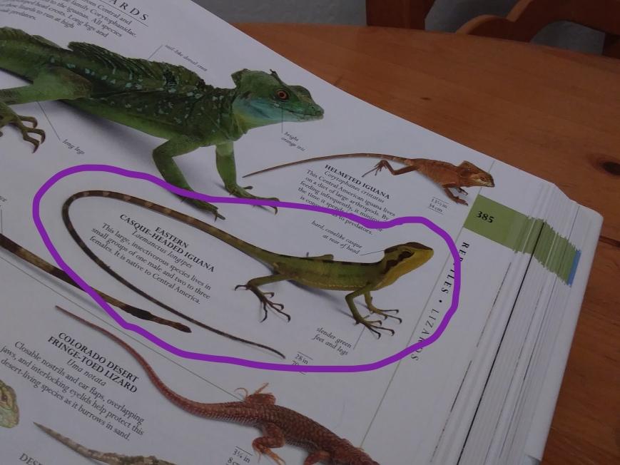 Iguana Pic.jpg